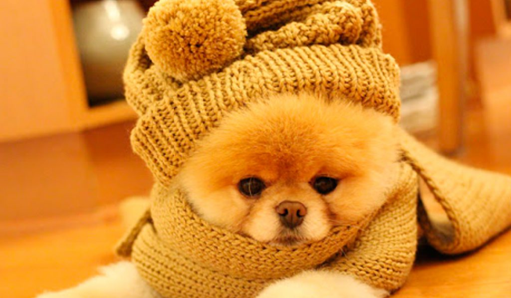 Protege a tus mascotas del frio