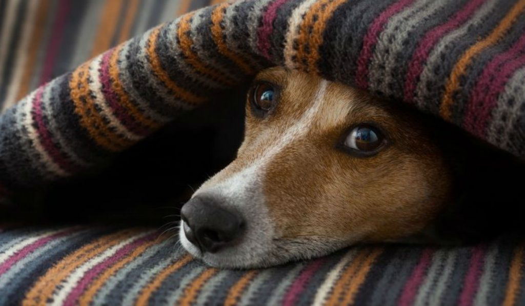 Protege a tus mascotas del frío de invierno