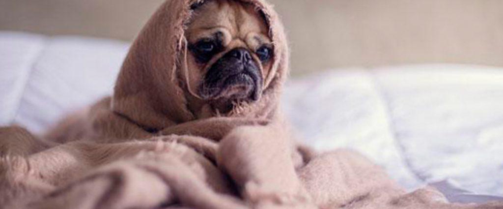 Proteger mascotas del frío