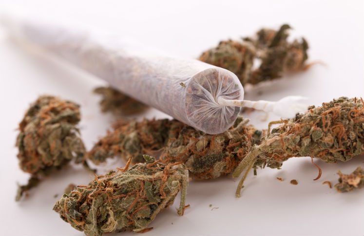 Crearán un sitio web que contendrá información sobre el uso de la mariguana
