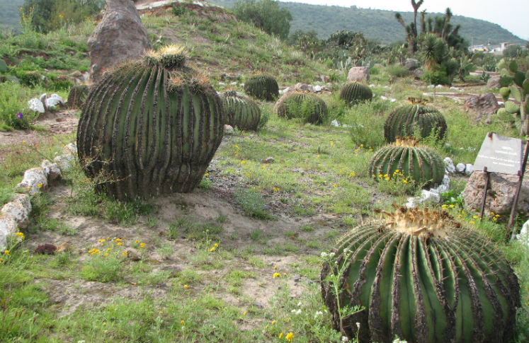Jardín botánico Ollintepetl