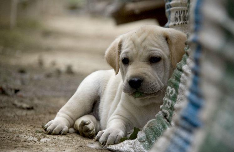 Adopta a perros y gatos abandonados