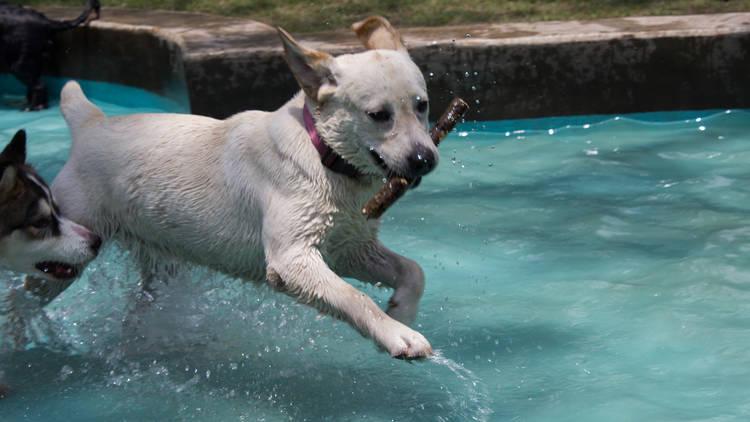 parque canino naucalli