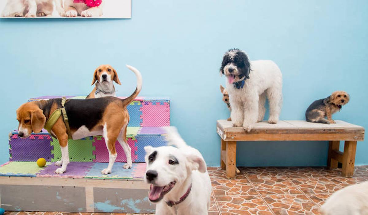 pets imaginarium para mascotas en cdmx
