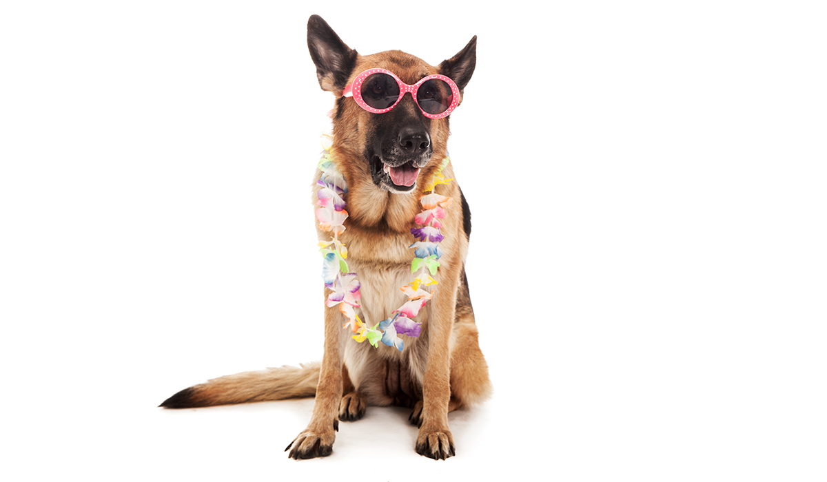 Estado de ánimo perros