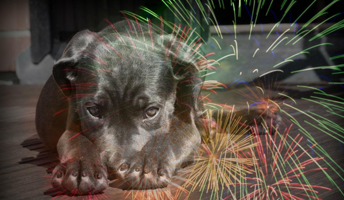 Protege a tus mascotas de los fuegos artificiales